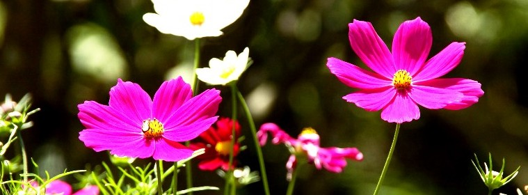 Flower_HQ_Wallpapers_laba.ws
