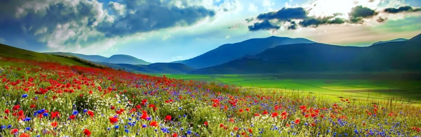 Spring Wildflowers Carpet Amazing Meadow Pretty Sky Lovely Poppies Flowers Beautiful Wallpapers