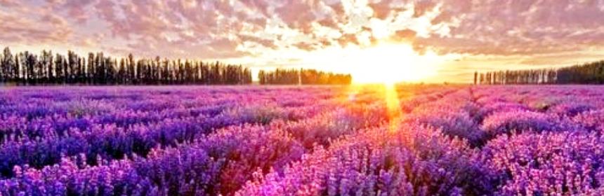 Salmo 4 – Oração para pedir a justiça de Deus  - Palavra de Deus para Hoje