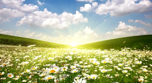 Salmo 5 - Oração da manhã - Palavra de Deus para Hoje