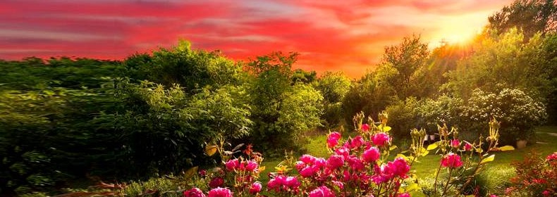 salmo-25-oração-para-pedir-livramento-perdão-e-a-proteção-de-deus-imagem 2